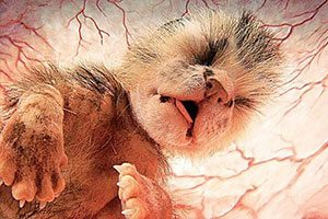 عکس حیوانات در رحم مادر