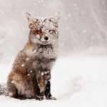 حیوانات در برف (۱)