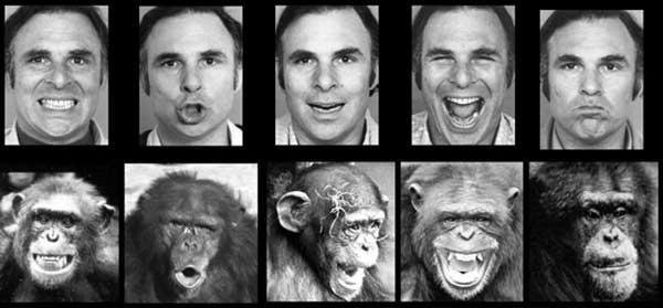 علائم چهره در ارتباطات و مذاکره - شباهت های ما و میمون ها
