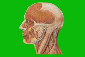 علائم چهره و زبان بدن و نقش آنها در ارتباطات و مذاکره