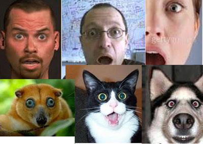 علائم چهره یا Facial Expressions در حیوانات