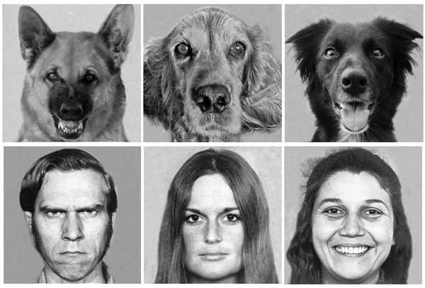 علائم چهره در ارتباطات و مذاکره - شباهت های ما و سایر پستانداران