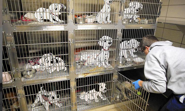 صد و یک سگ خالدار – One Hundred and One Dalmatians