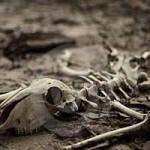 استراتژیهایی که مرده به دنیا میایند (قسمت دوم)