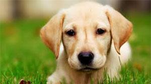 گوگل شرکتی برای سگها