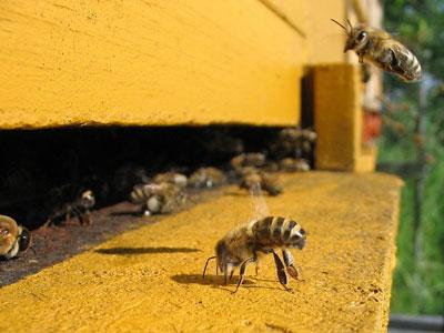 تفکر سیستمی و نابودی زنبورها