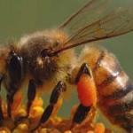 تفکر سیستمی-درس 9: تفکر سیستمی و زنبورهایی که ناپدید میشدند