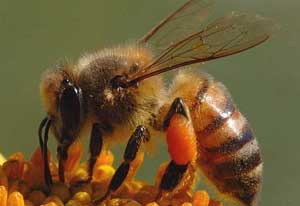 تفکر سیستمی و ناپدید شدن زنبورهای عسل