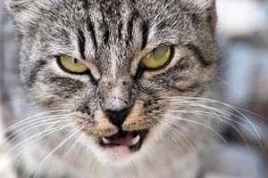 انواع خشونت و رفتارهای ناشی از خشم