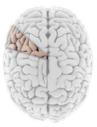 شبه علم - تنها ده درصد مغز کار میکند