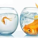 SEO چیست؟-درس 7: ابزاری برای مقایسه عملکرد سایتهای رقیب