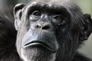 تصمیم گیری اقتصادی میمون ها و طوطی ها