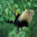 کسب و کاری برای میمونها
