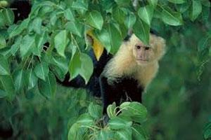 کسب و کاری برای میمونها - کیث چن