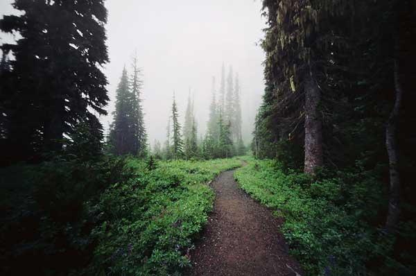 کوه رینر، واشنگتن، ایالات متحده آمریکا