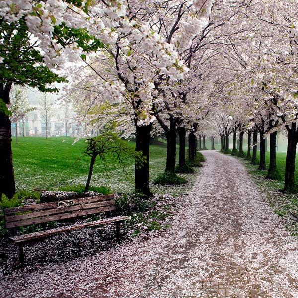 بهار در اسپنسر اسمیت پارک، برلینگتون، انتاریو، کانادا