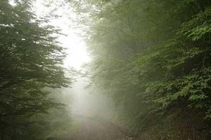 جنگل ابر-شاهرود-ایران