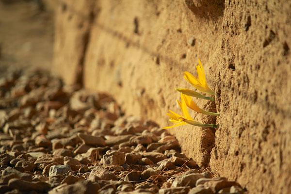 flower-tree-growing-concrete-pavement-motamem1