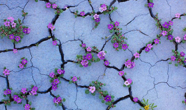 flower-tree-growing-concrete-pavement-motamem10