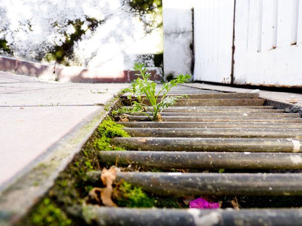 flower-tree-growing-concrete-pavement-motamem3