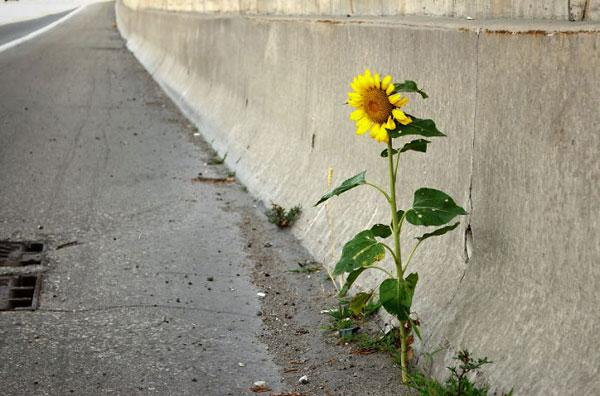 flower-tree-growing-concrete-pavement-motamem6