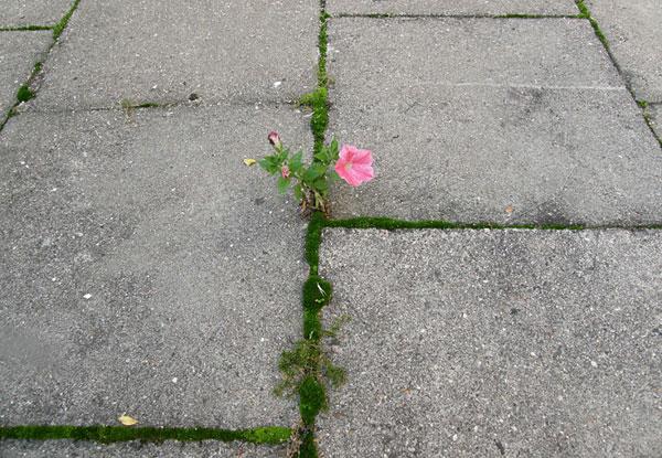 flower-tree-growing-concrete-pavement-motamem7
