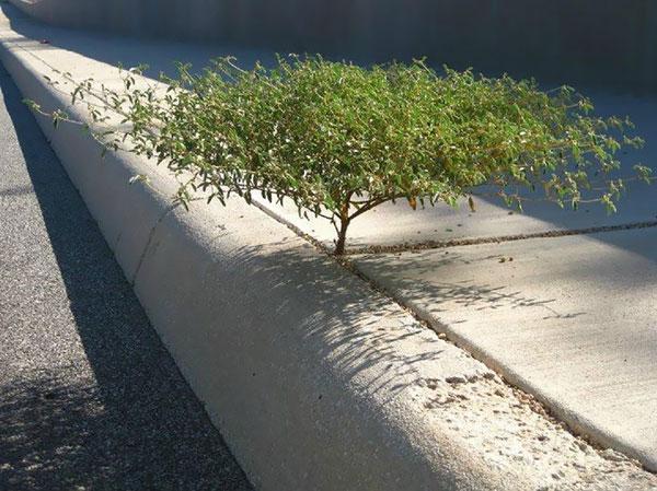 flower-tree-growing-concrete-pavement-motamem9