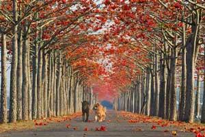 مسیرهای زیبای پیاده روی در جهان