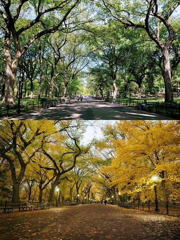پارک مرکزی، نیویورک، ایالات متحده آمریکا