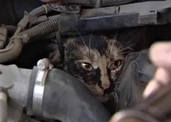 گربه های شهری و حمایت از حیوانات