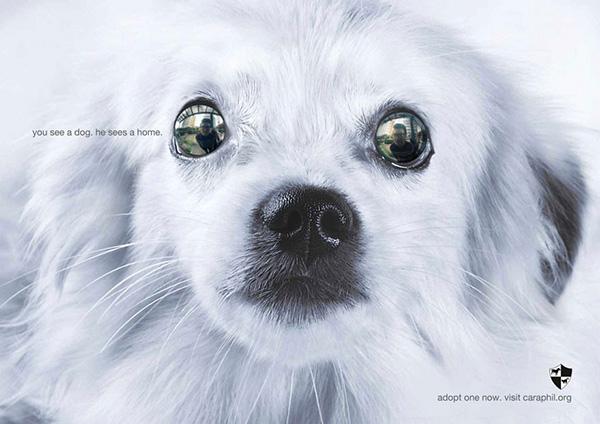 شما یک سگ میبینید؛ او یک خانه میبیند.