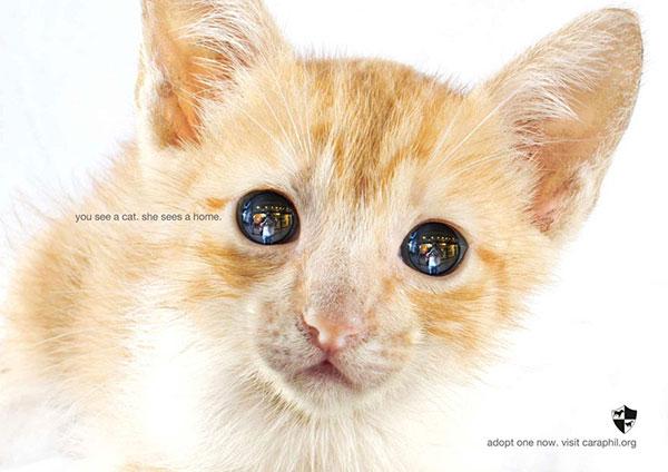 شما یک گربه میبینید؛ او یک خانه میبیند.