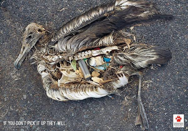 اگر شما آشغال ها را جمع نکنید، حیوانات خواهند کرد.