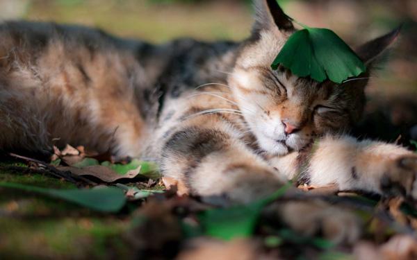 Sleeping--Animal-motamem13
