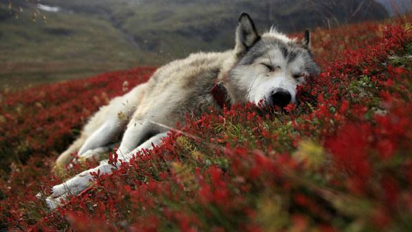 Sleeping--Animal-motamem15