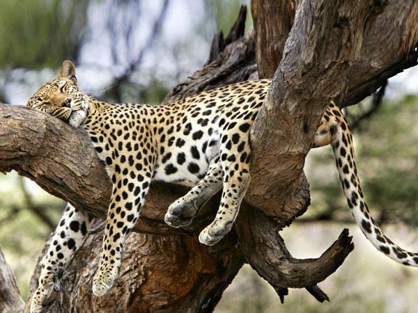 Sleeping--Animal-motamem17