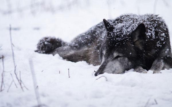 Sleeping--Animal-motamem18