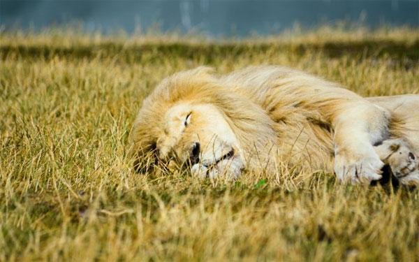 Sleeping--Animal-motamem19