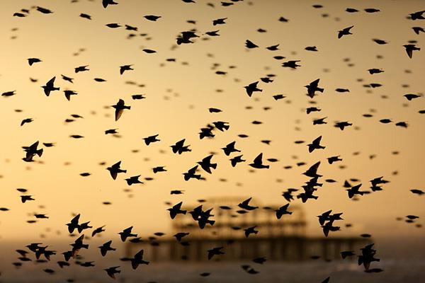 تصاویر مهاجرت دسته جمعی پرندگان در شب