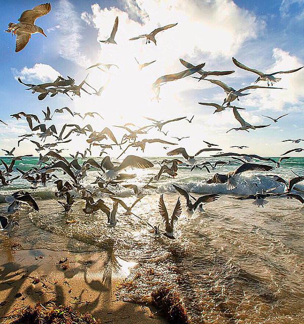 تصاویر مهاجرت پرندگان دریایی برای یافتن غذا در اثر تغییرات شرایط اقلیمی