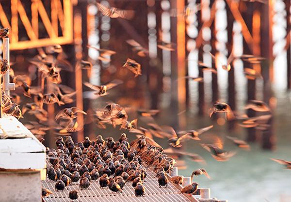هنوز به صورت کاملاً دقیق مشخص نیست که پرندگان مهاجر چگونه مسیر خود را پیدا میکنند