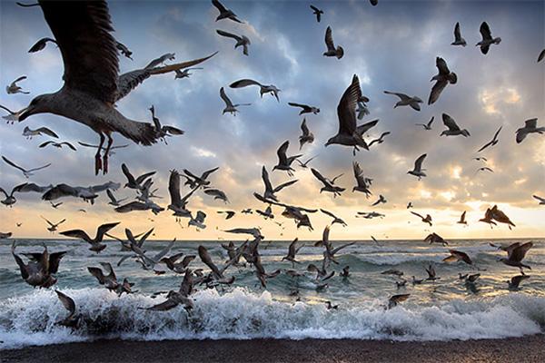 بسیاری از پرندگان مهاجر میدان مغناطیسی کره زمین را به خوبی حس می کنند