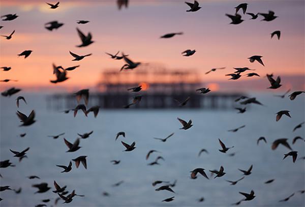 یکی از تصاویر زیبای مهاجرت پرندگان به سمت قطب شمال