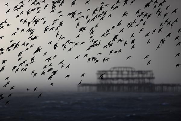 چرا پرندگان مهاجرت می کنند