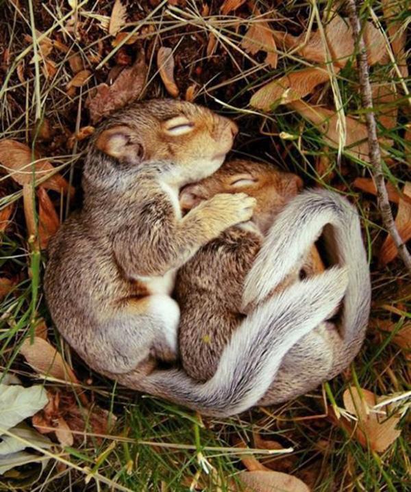 cute_sleepy_animal_motamem_11