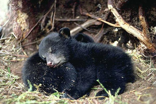 cute_sleepy_animal_motamem_2