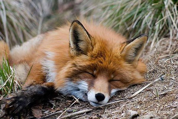 cute_sleepy_animal_motamem_6