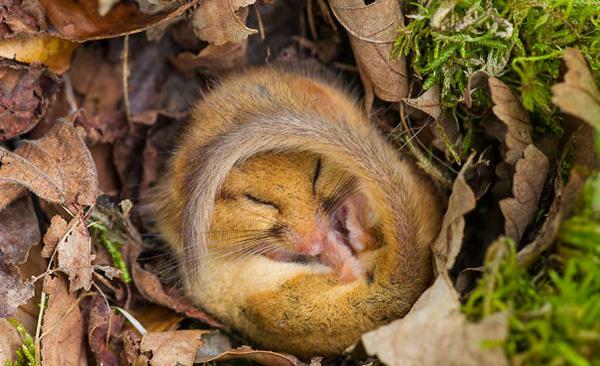 cute_sleepy_animal_motamem_8
