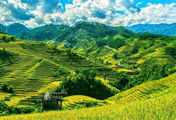 عکس مزرعه برنج