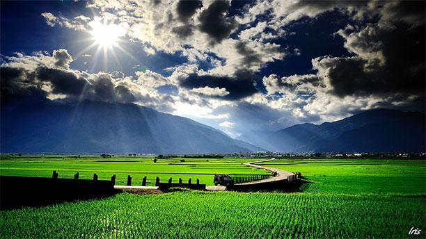مجموعه تصاویر مزرعه های برنج